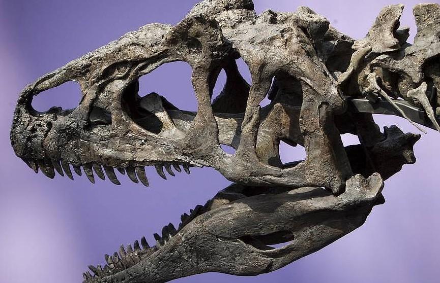 Скелет тираннозавра продали на аукционе за рекордные $31,8 млн