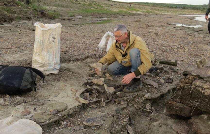 Кладбище мамонтов обнаружили в России