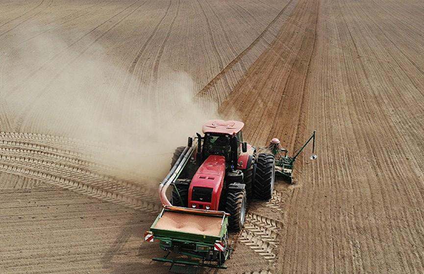 Посеять озимые в течение недели – задача номер один. Лукашенко заслушал доклад главы Минсельхозпрода