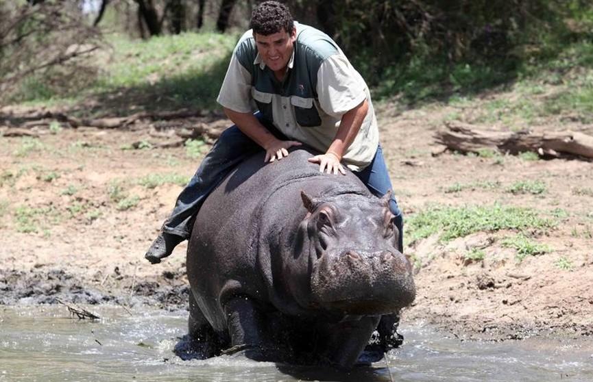 В ЮАР домашний бегемот растерзал катавшегося на нем хозяина
