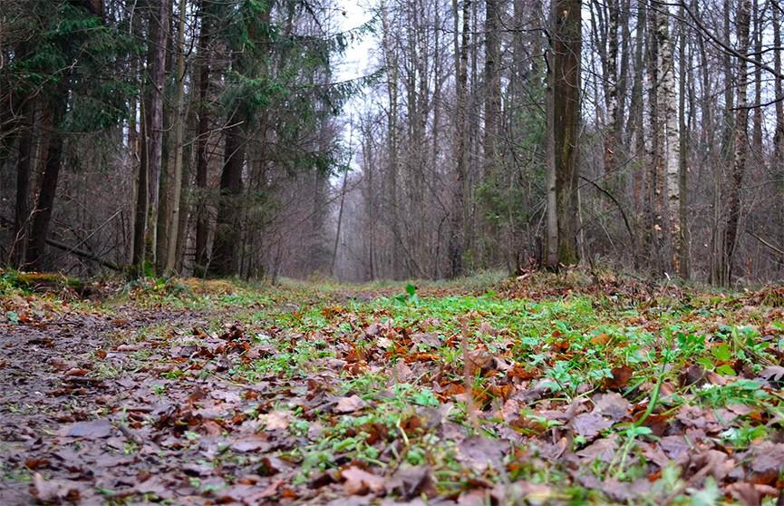 Пропавшего мужчину из Светлогорска нашли убитым в лесу, его насмерть забили домкратом