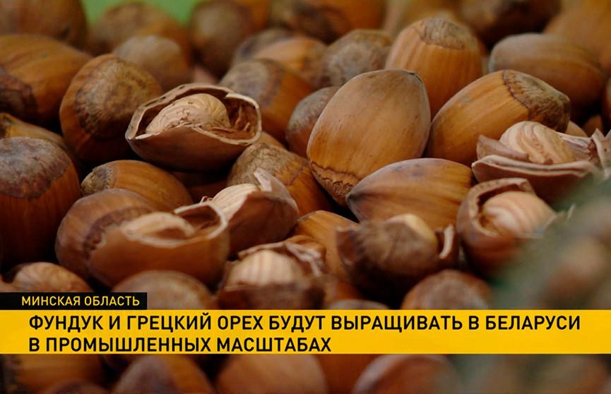 Время собирать орехи: смогут ли наши фермеры перехватить контроль над рынком грецкого ореха и фундука?