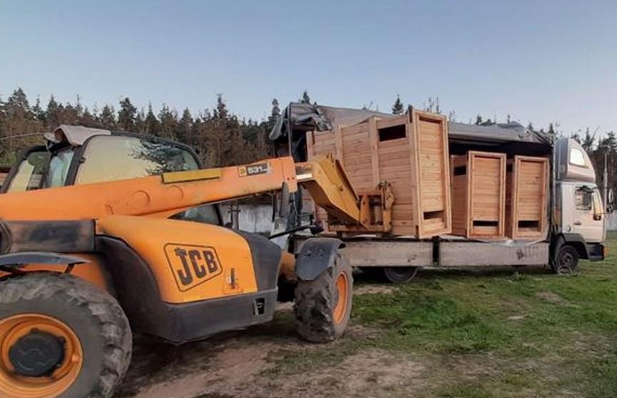 Партию зубров из Беловежской пущи отправили в Костромскую область