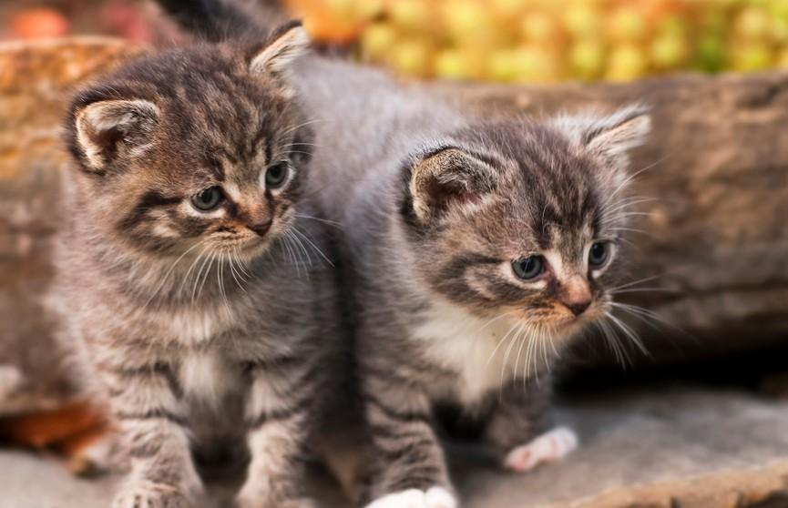 Никогда не догадаетесь, что сделали котята, когда хозяйка захотела покататься на лодке! Посмотрите, это поразительно! (ВИДЕО)