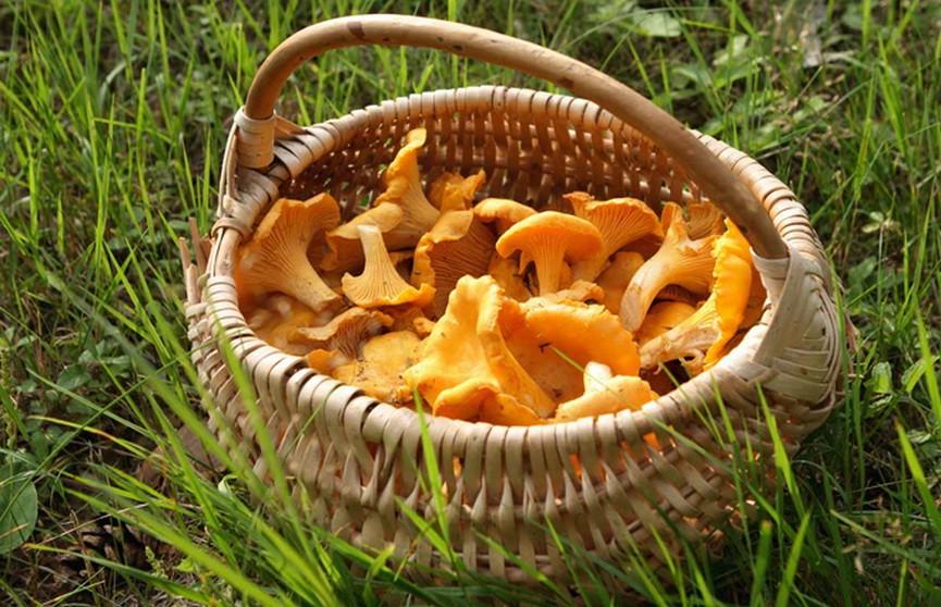 На Брестчине в грибах и ягодах обнаружили повышенное содержание цезия-137