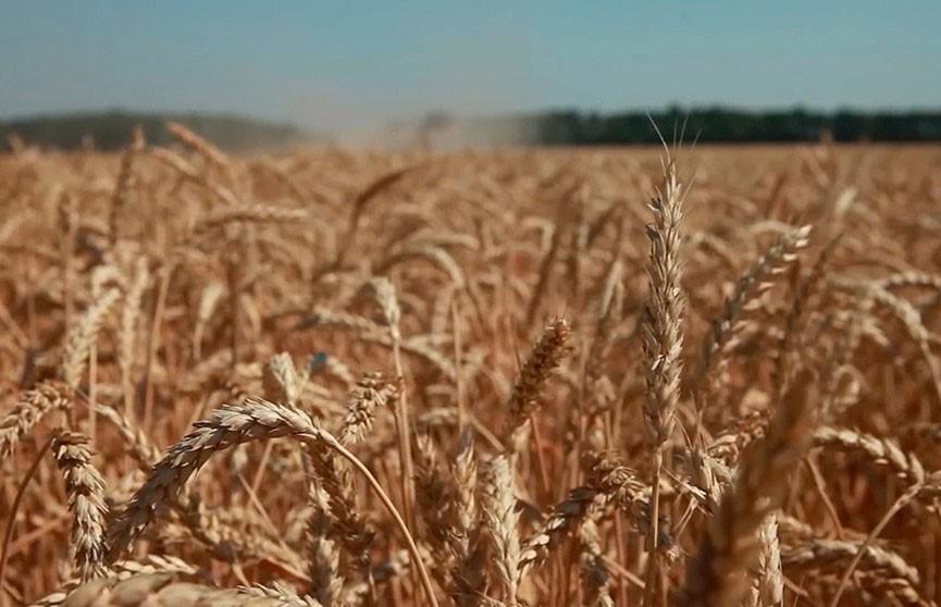 Александр Лукашенко поздравил работников сельского хозяйства с профессиональным праздником