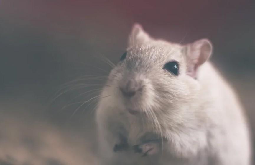 Мышь решила украсть еду у хаски. Посмотрите, чем все закончилось! Это очень напряженный момент! (ВИДЕО)