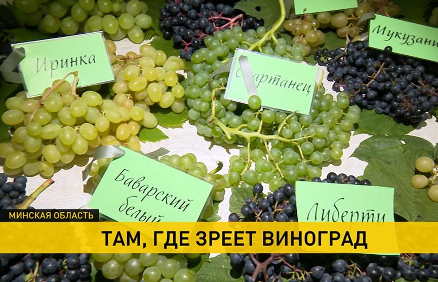 Белорусские виноградари встретились под Минском