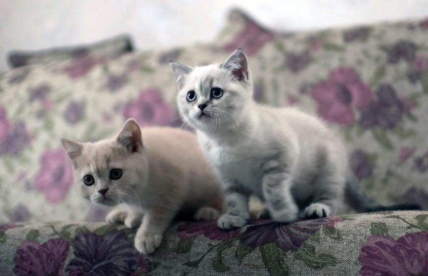 «Как же я ее понимаю»: кошка показала забавный способ отвлечь своих котят, чтобы немного отдохнуть (ВИДЕО)