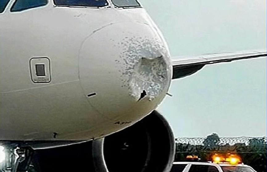 Стая птиц пробила нос самолету, летевшему из Флориды – лайнер экстренно приземлился