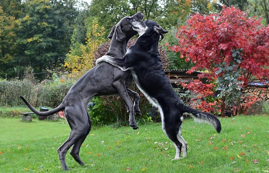 «Я и то хуже танцую»: собаки исполнили ламбаду и покорили сеть