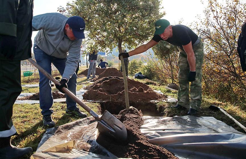 К акции «Чистый лес» присоединились тысячи добровольцев по всей Беларуси