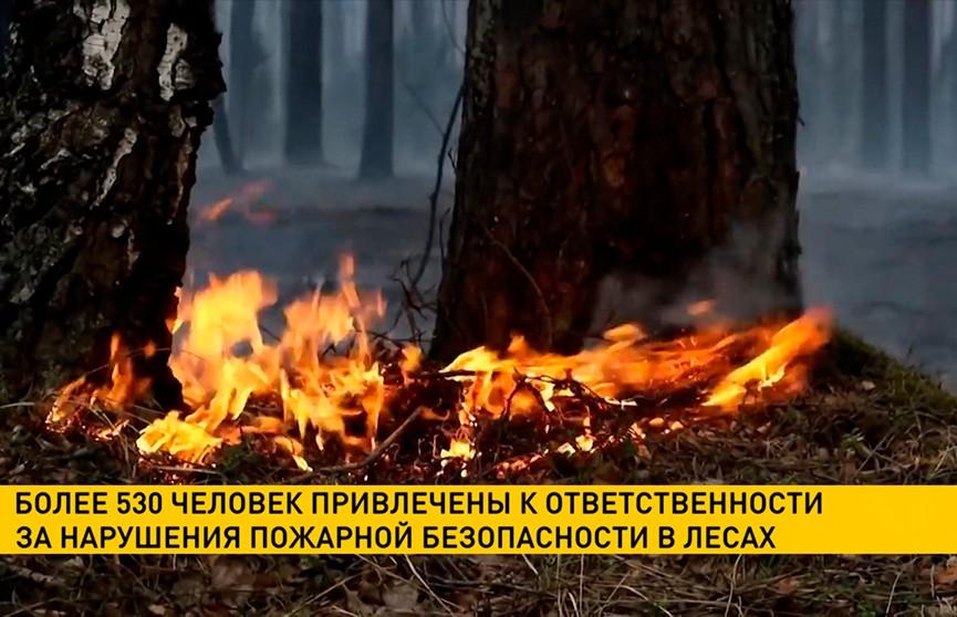 Полтысячи человек привлекли к ответственности за нарушение пожарной безопасности в лесах с начала года