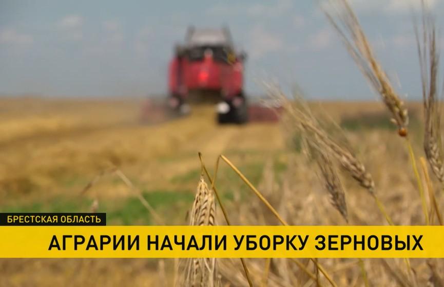 Как справляются с жарой на полях? Рассказываем на примере сельхозпредприятия «Остромечево»