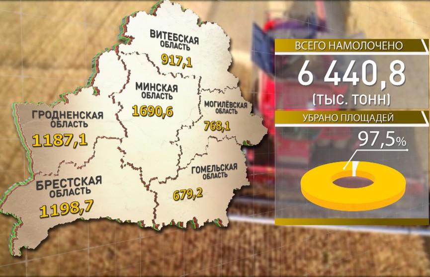 Всего 2,5% площадей зерновых осталось обмолотить аграриям