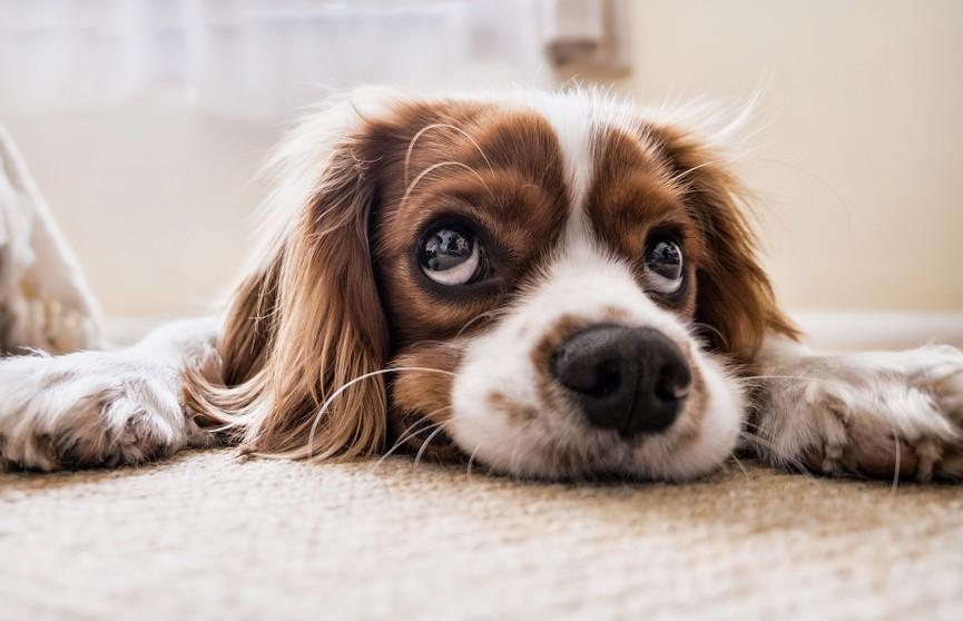 «Я не виноват»: засмущавшийся из-за разбитой вазы пёс умилил соцсети