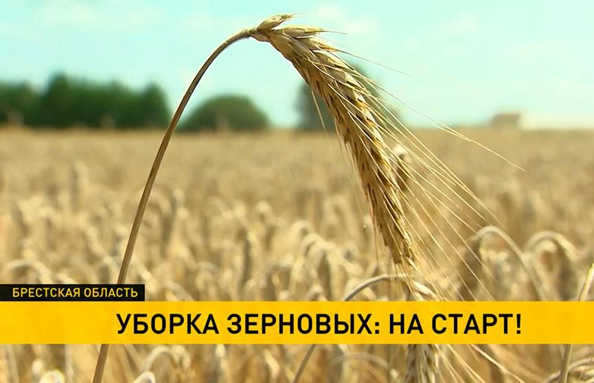 В Брестской области началась уборка зерновых