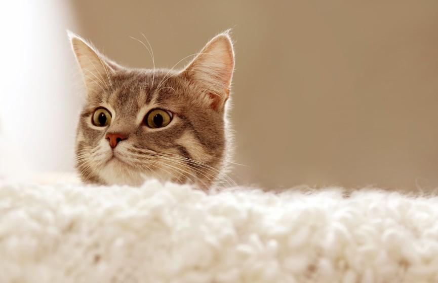 «Мне кажется, тут все напугались»: кот устроил погром в ветеринарной клинике (ВИДЕО)