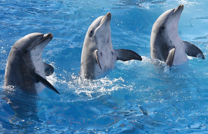 Дельфинам оказался интересен мультфильм про Губку Боба