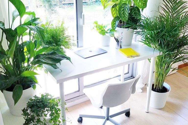 5 комнатных растений, которые защищают от вирусов