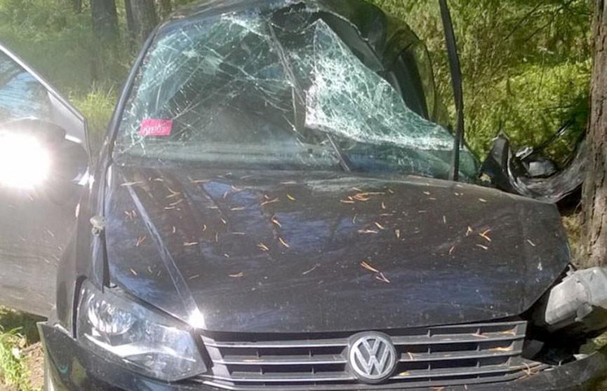ДТП в Мядельском районе: Volkswagen врезался в дерево, водитель госпитализирован