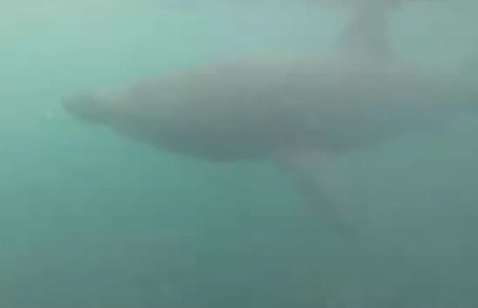 5-метровая акула подплыла к любителю рыб и попала на видео
