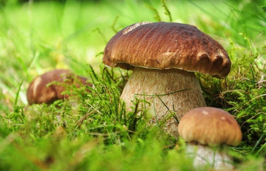 Гражданка Литвы увлеклась сбором грибов и случайно попала в Беларусь