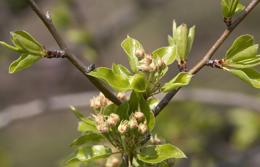 К 100-летию комсомола: в парке Победы заложили яблоневую аллею
