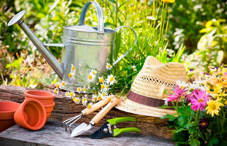 Лунный календарь на 29 июня: благоприятный день для садоводов и огородников