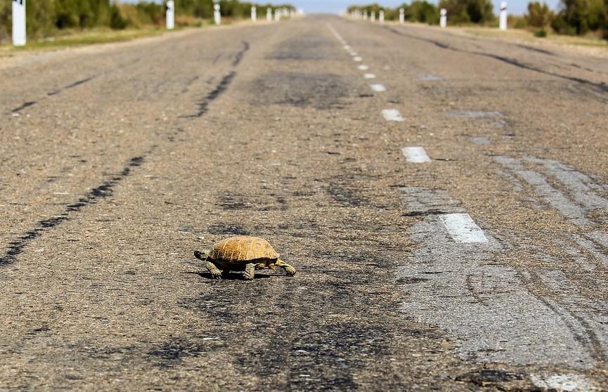 Черепаха влетела в лобовое стекло автомобиля и разбила голову пенсионерке