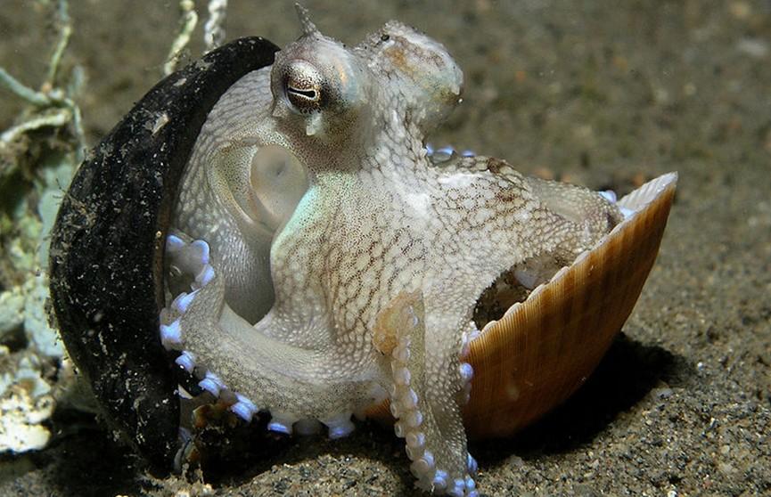 Аквалангисты нашли для осьминога новый дом, который жил в пластиковом стакане (Видео)