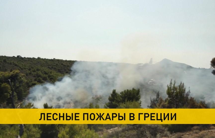 Лесные пожары на греческом острове Эвбея: введен режим чрезвычайного положения