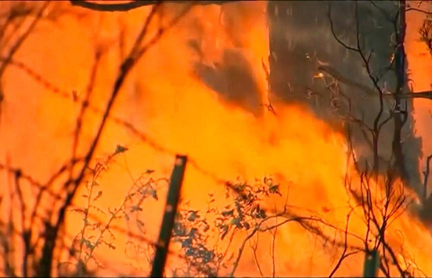 Лесные пожары бушуют в австралийском штате Тасмания