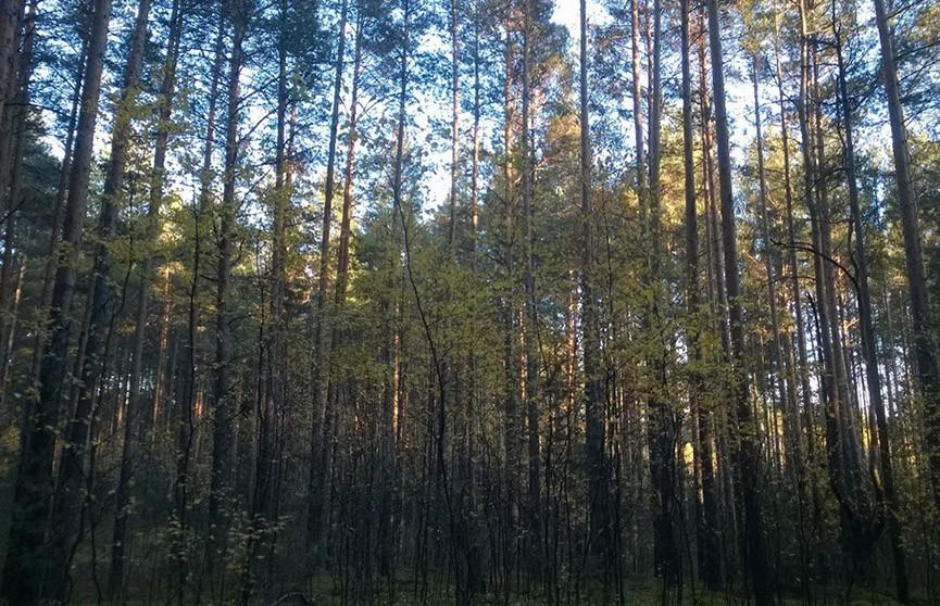 Ушла в лес и не вернулась. Пенсионерку ищут в Лельчицком районе