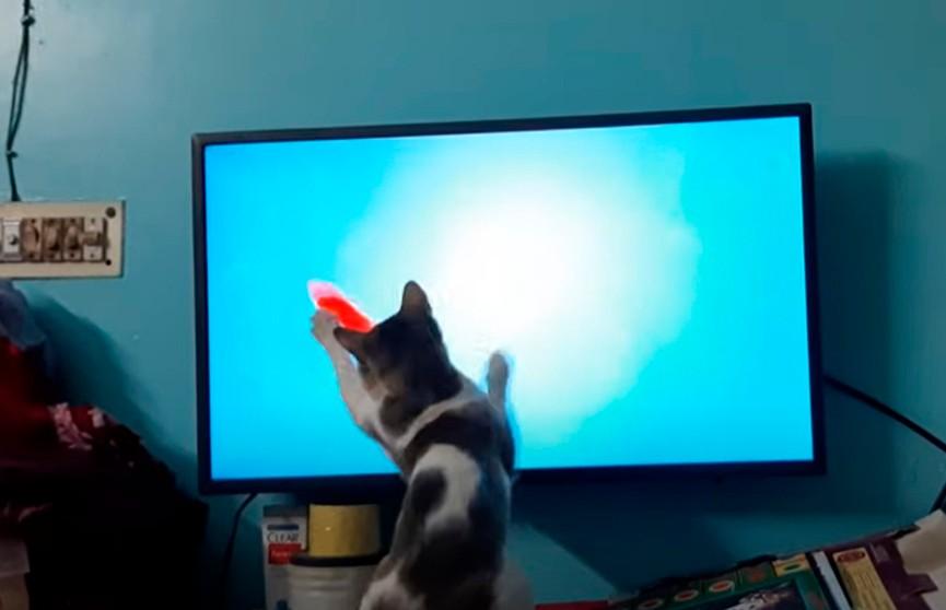 Домашняя рыбалка кота во время карантина рассмешила пользователей соцсетей