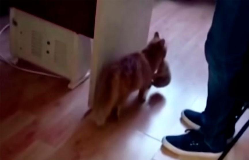 В Турции бездомная кошка пришла к врачам с котятами: им нужна была помощь, и она знала, куда нужно идти