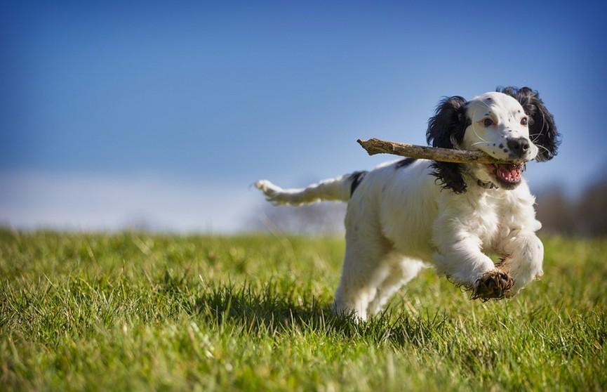 Попытки собаки принести в дом палку рассмешили пользователей Сети. Посмотрите, это 100% поднимет вам настроение! (ВИДЕО)
