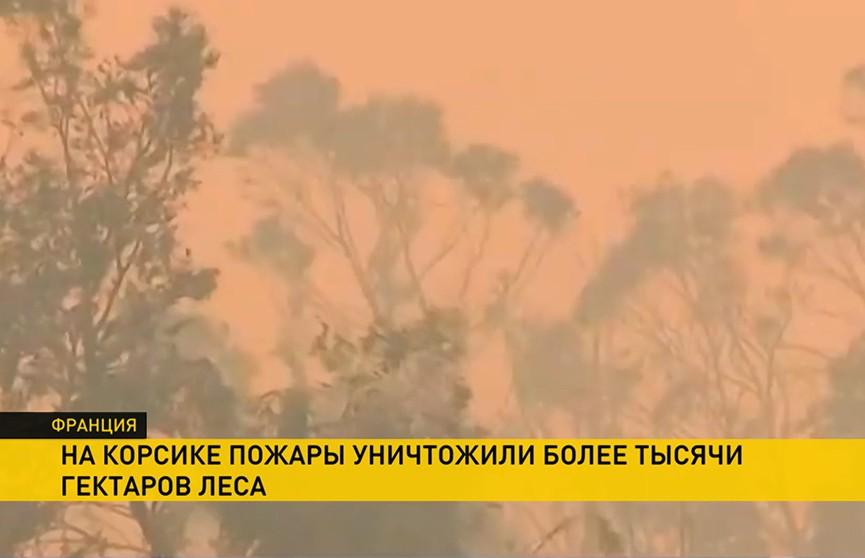 Лесные пожары на Корсике: уничтожено более 1000 га леса