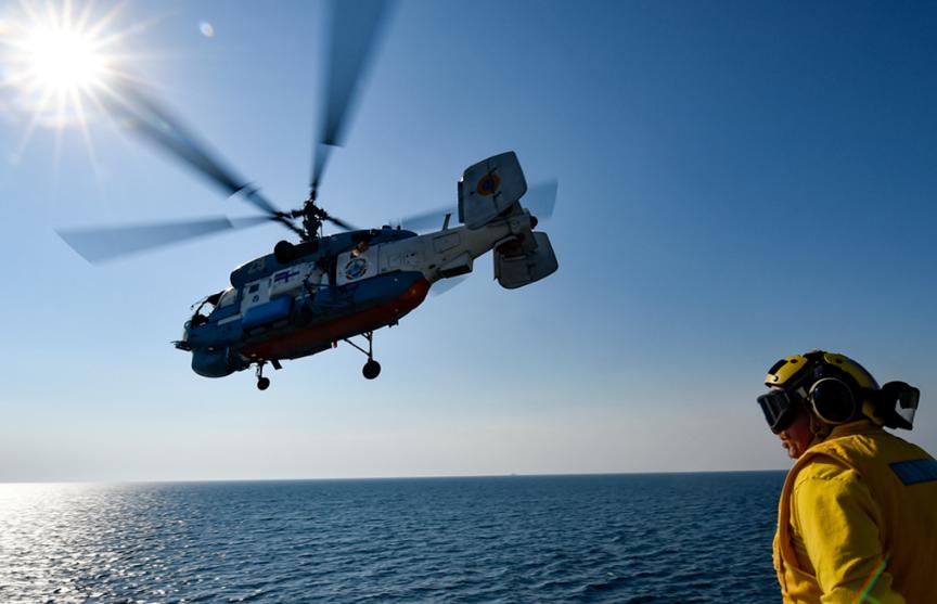 Около 18 морских свиней погибли при подготовке к учениям НАТО в Балтике