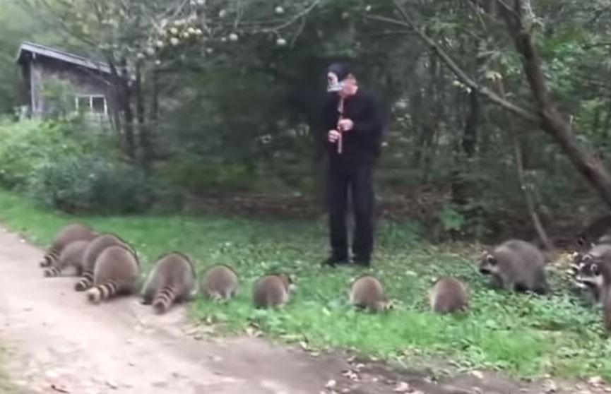 Американец выманил из леса десятки енотов игрой на флейте (ВИДЕО)