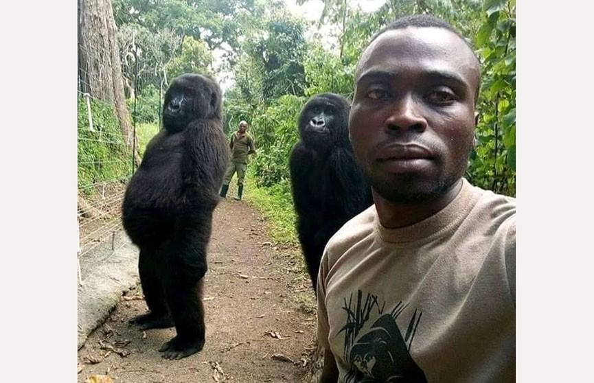 Рейнджер загрузил в Facebook селфи с гориллами и стал звездой
