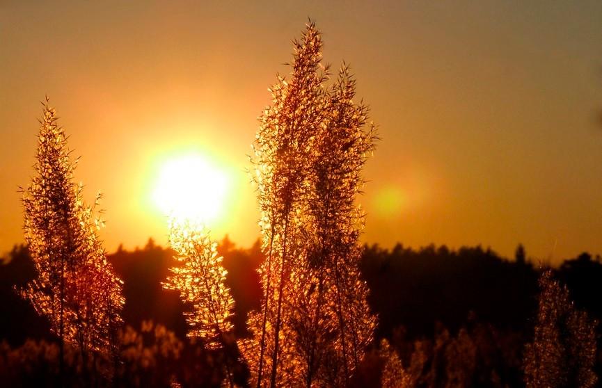 Жара возвращается. На 26 июля в Беларуси объявлен оранжевый уровень опасности