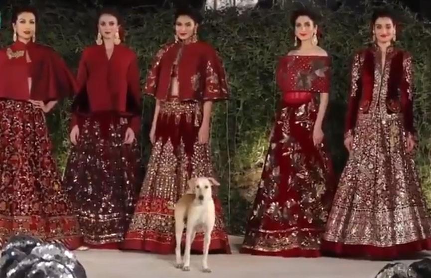 Бродячий пёс выбежал на подиум и показал моделям, кто тут звезда