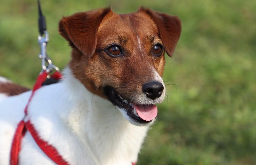Пёс Мачо спас новорождённую девочку в Санкт-Петербурге
