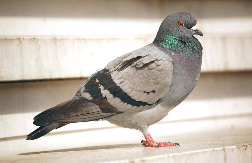 Британка покормила голубя и получила штраф