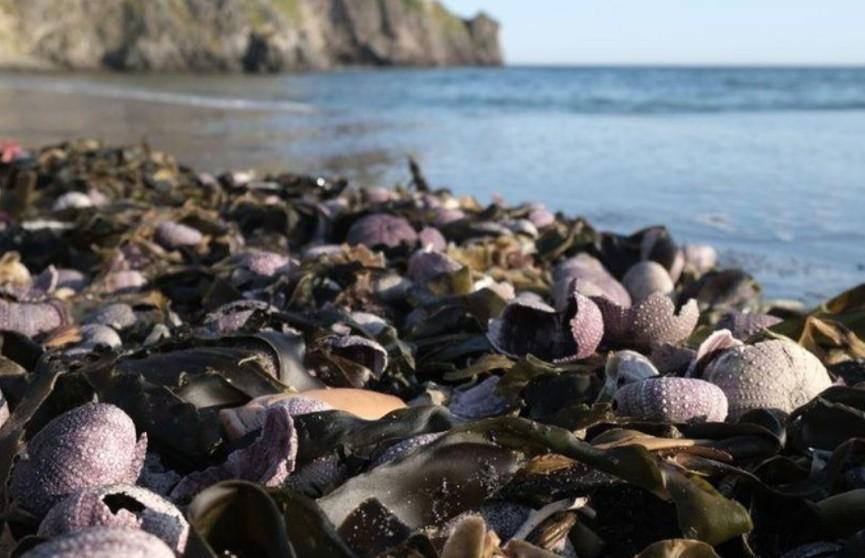 Серферы на Камчатке рассказали об ожогах глаз и кожи из-за загрязнений океана
