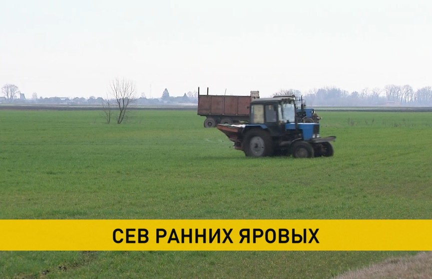 Белорусские аграрии засеяли более половины сельскохозяйственных площадей