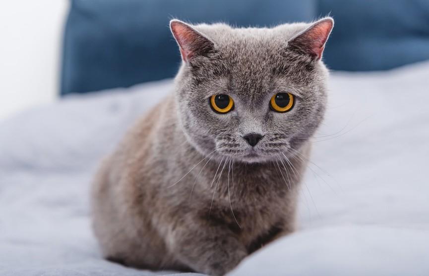 Посмотрите, как хозяйка в шутку наказала наглого котенка! А пользователям Сети это не очень понравилось! (ВИДЕО)