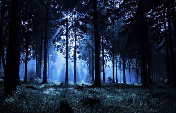 Муж оставил жену в лесу и пошёл домой: женщину нашли спасатели