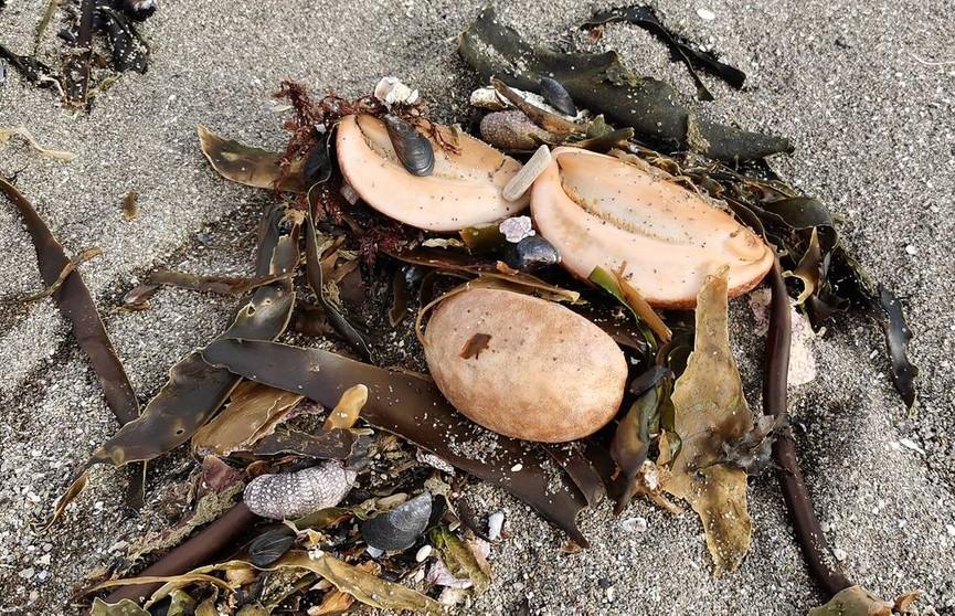 Власти Камчатки рассматривают три причины загрязнения у берегов полуострова